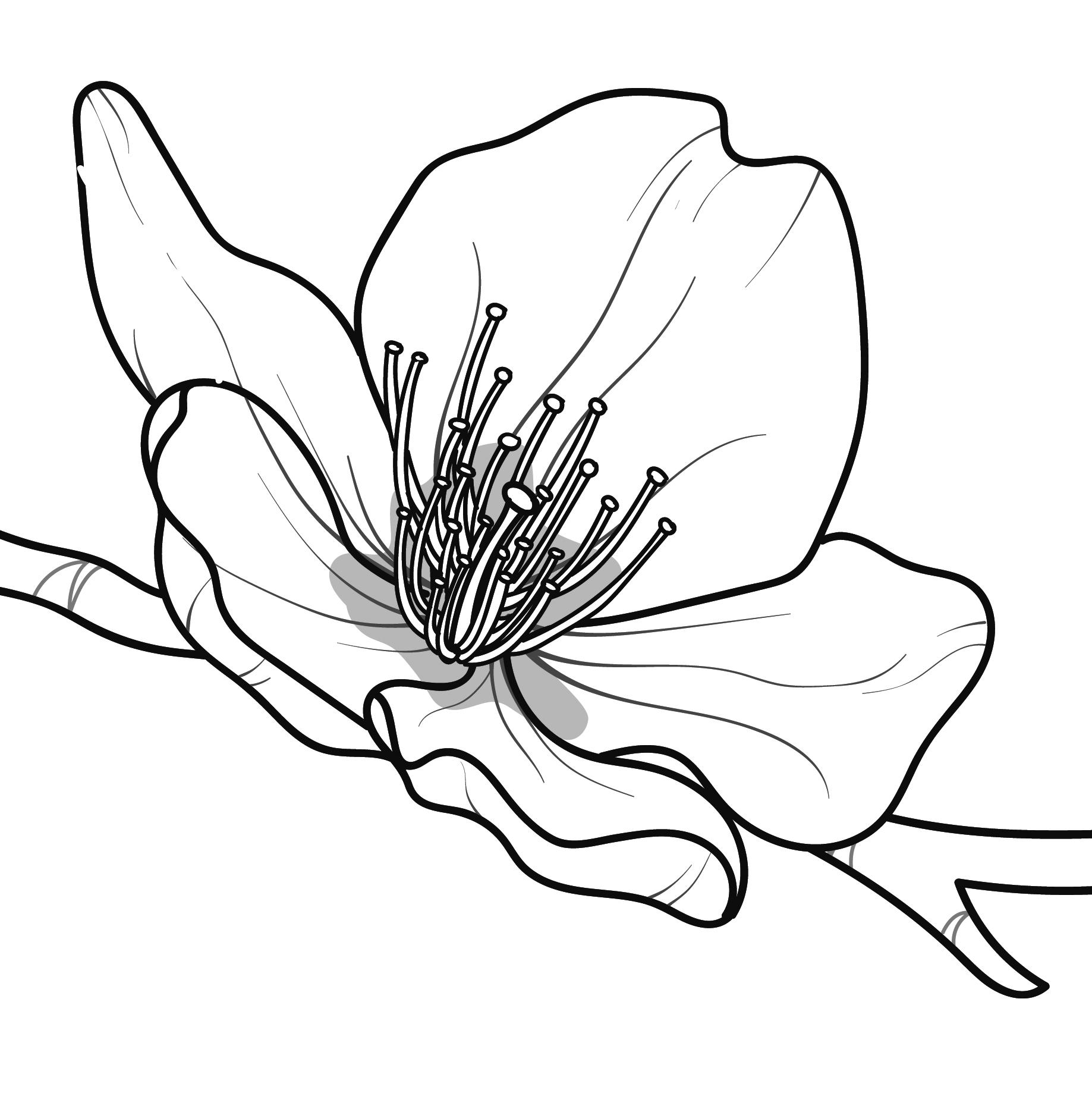 Flower-11.44.44