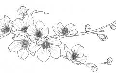 Sakura branch_2
